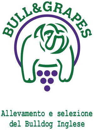 Bull & Grapes - Allevamento e selezione del Bulldog Inglese