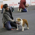 bull-and-grapes-dazzling-chick-padova-international-dog-show-2