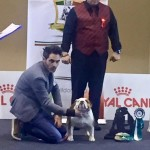 bull-and-grapes-dazzling-chick-padova-international-dog-show-3