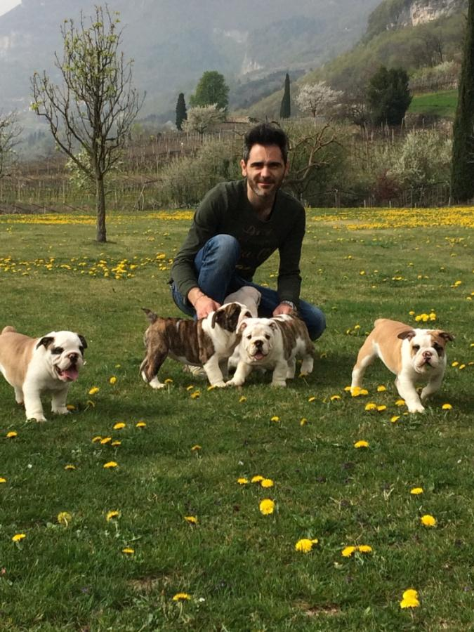 puppies-cuccioli-bulldog-bull-and-grapes-rovereto-8